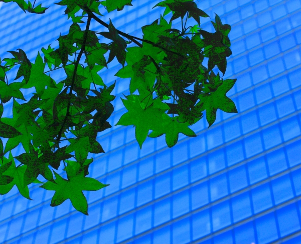 Colorful green leaves against a Manhattan Skyscraper