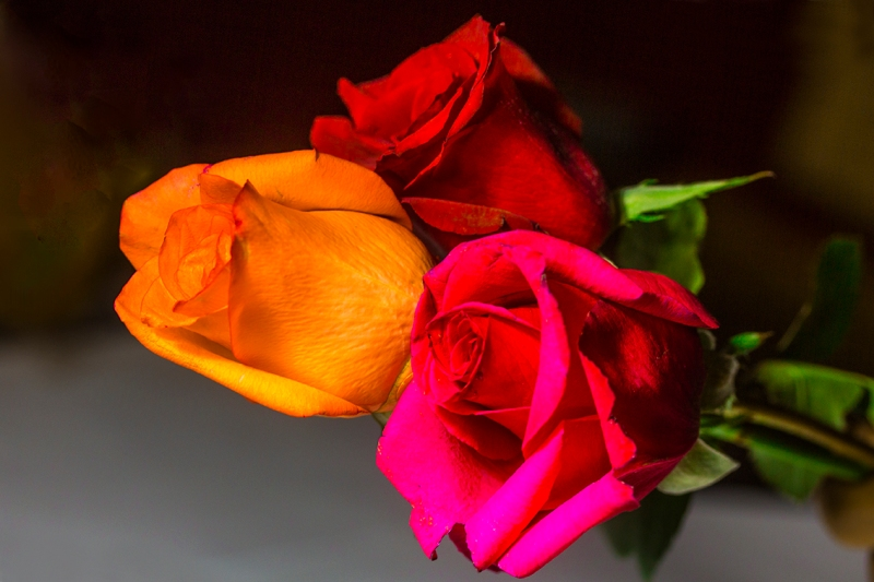 Three colored roses