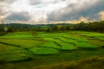 Paddy fields of South India